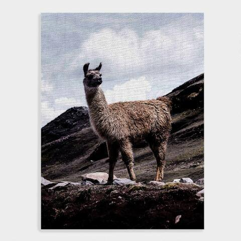 Hey Llama Canvas Wall Art