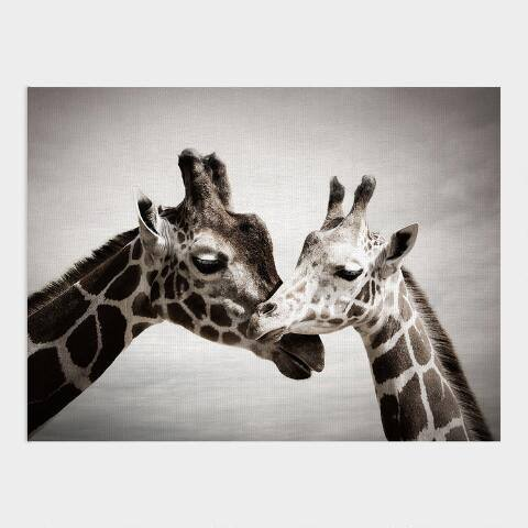 Giraffe Kisses Canvas Wall Art