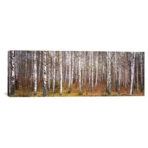 Silver birch trees in a forestNarke Sweden by Panoramic Images Canvas Print