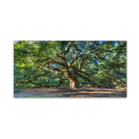 "'Angel Oak Charleston' by Pierre Leclerc Ready to Hang Canvas Wall Art (16""x32"")"