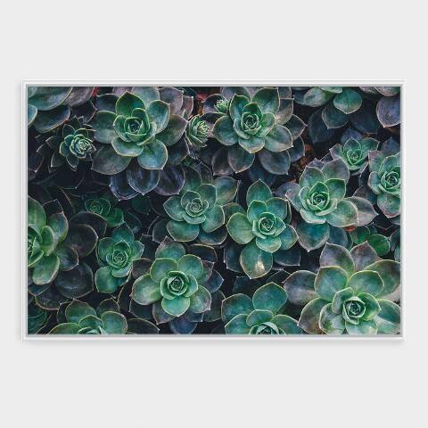 Patch of Succulents Wall Art in White Frame