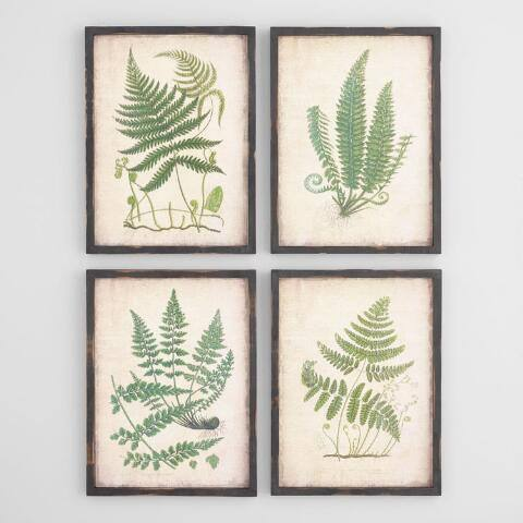 Fern Wall Art Set of 4