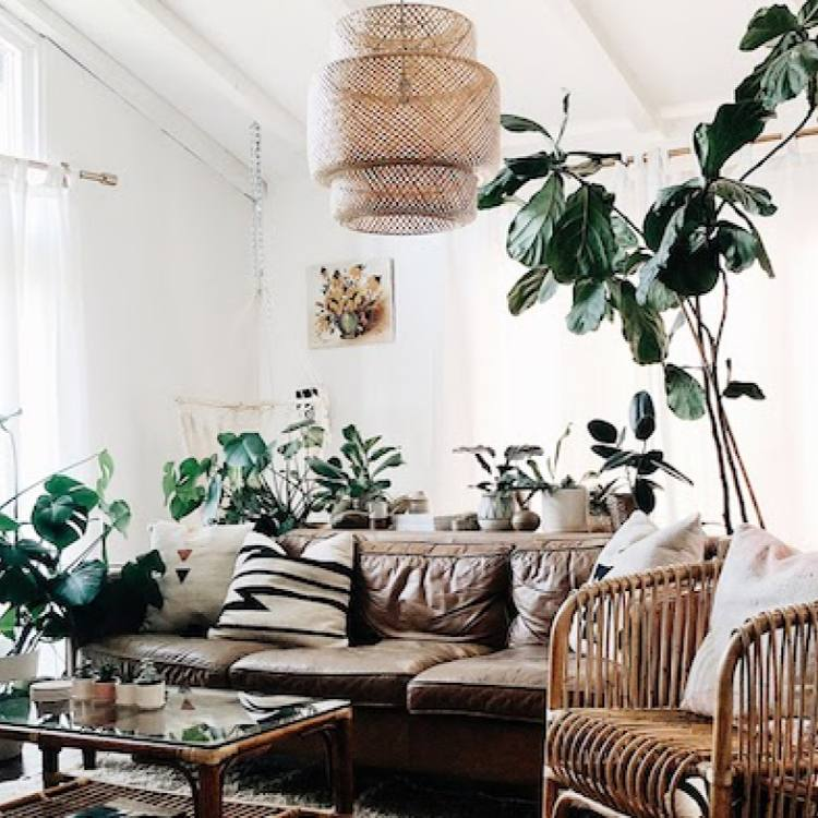Plant filled bohemian chic family living room