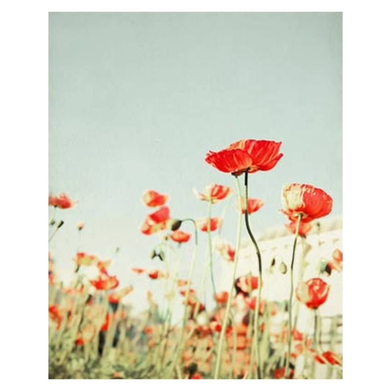 Bree Madden Red Poppy Flowers Print