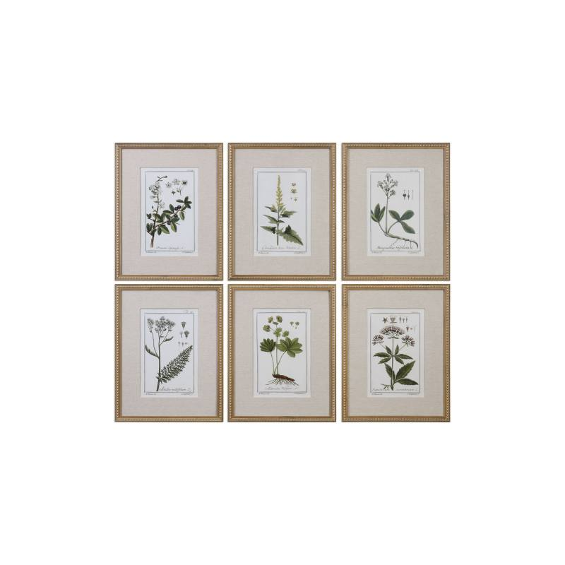 Floral Botanical Set of 6 Art Prints