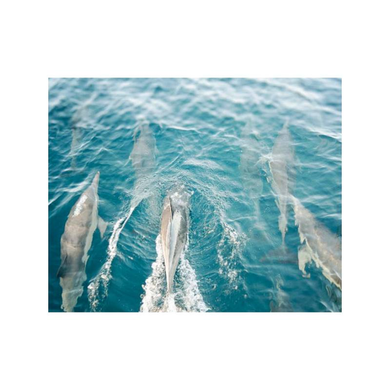 Bree Madden Dolphins So Free Photography Print