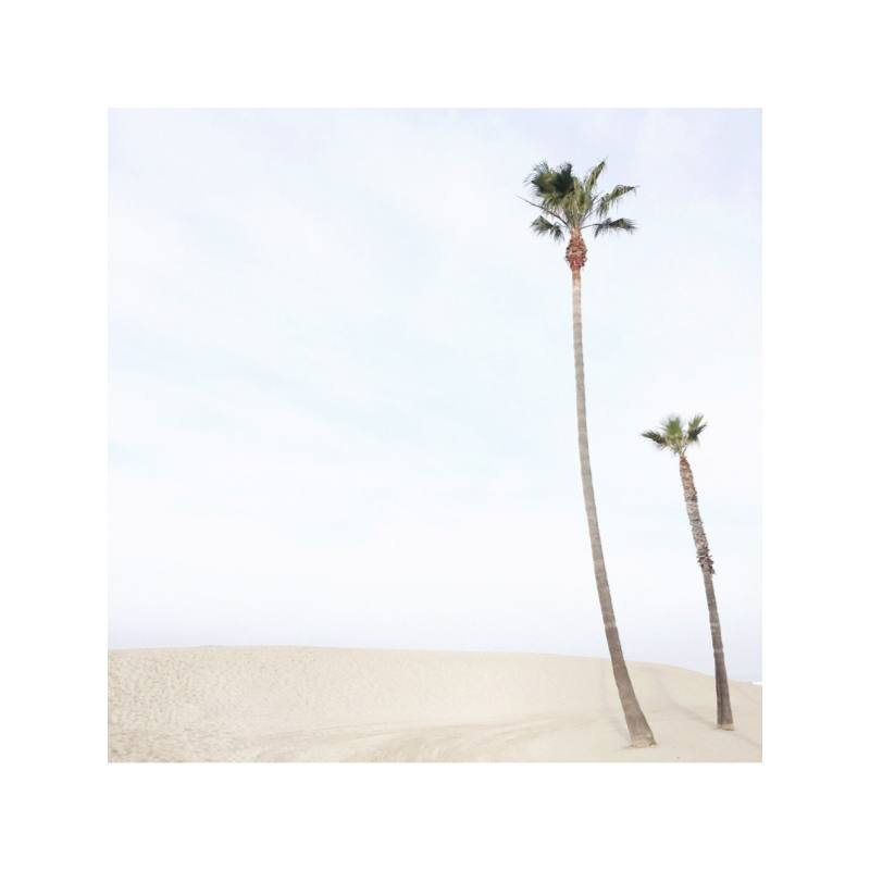 Carley's Camera Venice Beach Palms Photography Print